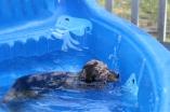Pistachio swimming (67)