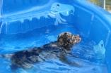 Pistachio swimming (68)