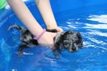 Pistachio swimming (7)