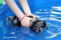 Pistachio swimming (8)
