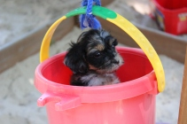 Yes, Praline, you are in the pulley bucket for the kids' play-fort