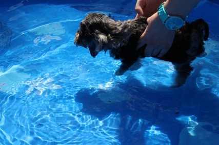Praline swimming (1)