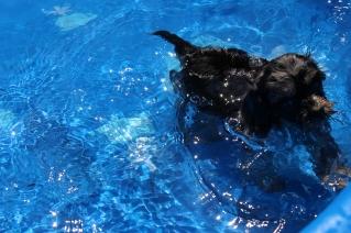 Praline swimming (10)