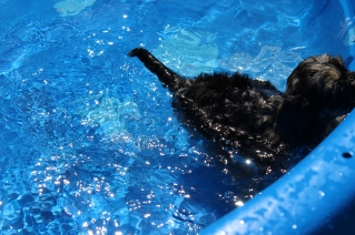 Praline swimming (11)