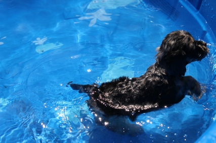 Praline swimming (12)