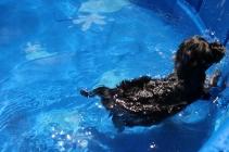 Praline swimming (13)