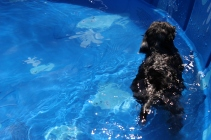 Praline swimming (14)