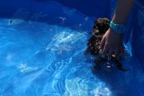 Praline swimming (15)
