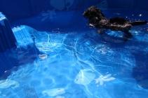 Praline swimming (17)