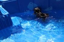 Praline swimming (18)