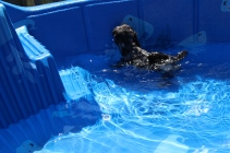 Praline swimming (19)