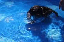 Praline swimming (2)