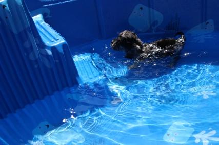 Praline swimming (20)