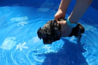 Praline swimming (22)