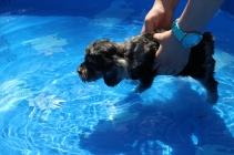 Praline swimming (24)