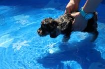 Praline swimming (25)
