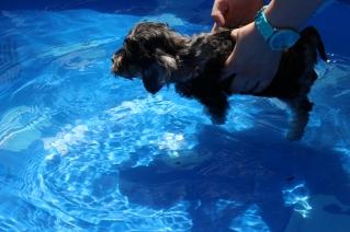 Praline swimming (27)