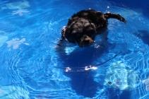 Praline swimming (3)