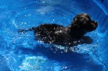 Praline swimming (5)