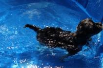 Praline swimming (6)