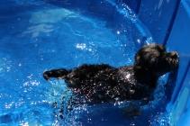 Praline swimming (7)