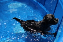 Praline swimming (8)