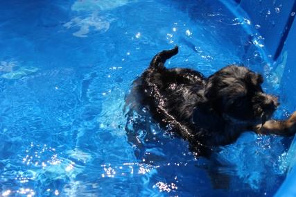 Praline swimming (9)