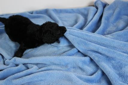 Kill that blanket!!