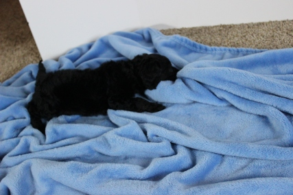 Killing blankets is exhausting work. I will lay down while I destroy my enemy blankie