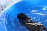Shea swimming (1)
