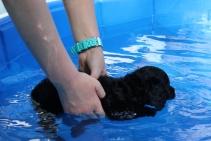 Shea swimming (32)
