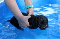 Shea swimming (33)