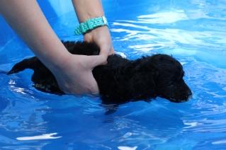 Shea swimming (36)