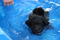 Shea swimming (39)