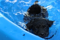 Shea swimming (40)