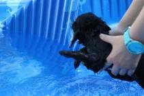 Shea swimming (48)