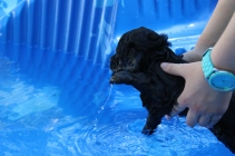 Shea swimming (49)