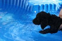 Shea swimming (52)