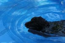 Shea swimming (54)