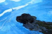 Shea swimming (55)