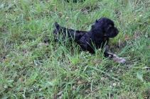 Betsy (9)