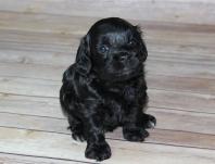 black female (14)