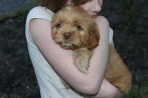 Archie (2)