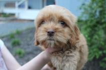 Archie (7)