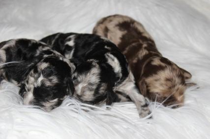 Bluebells babies 2015 (1)
