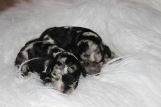 Bluebells babies 2015 (7)