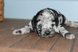 patches 2 weeks (1)