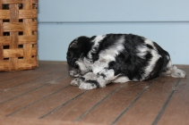 patches 2 weeks (10)