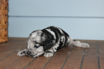 patches 2 weeks (11)