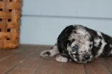 patches 2 weeks (12)